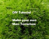 DIY Tutorial Make your Own Moss Terrarium
