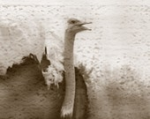 Back Off-Matted Photograph