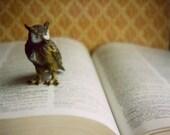 Owl on Page, print
