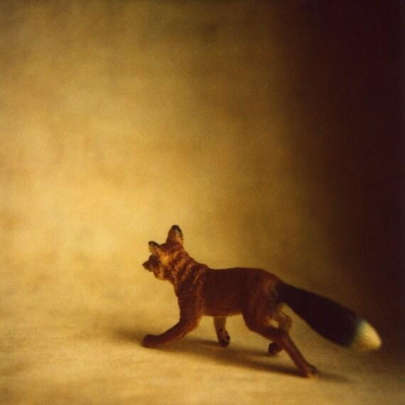 Fox, print