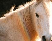 Square White Horse Photo Print