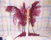 6  Burgundy \/  Wine Colored Ostrich Feathers