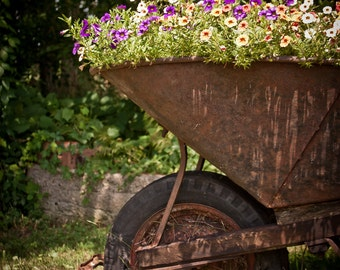 Flowers in Wheelbarrow Photographic Framed Metallic Print 16 x 20""