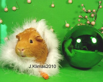 """Green GUINEA PIG DIVA Portrait - Limited Edition 8x10"""" Glossy Photograph"""