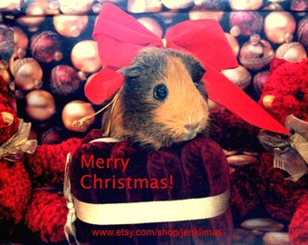 """Retro GUINEA PIG Red Bow CHRISTMAS 8x10"""" Print - Limited Edition Glossy Portrait Photograph"""