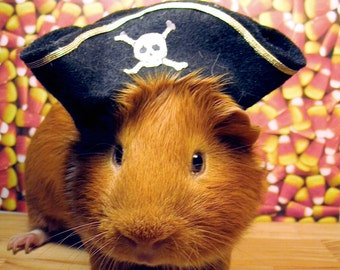 Funny GUINEA PIG PIRATE Limited Edition Halloween Photograph - Happy Halloween! Just Fork Over The Candy and Noone Gets Hurt
