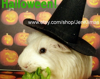 """HAPPY HALLOWEEN Guinea Pig Witch Munching Lettuce 8x10"""" Limited Edition Photograph"""