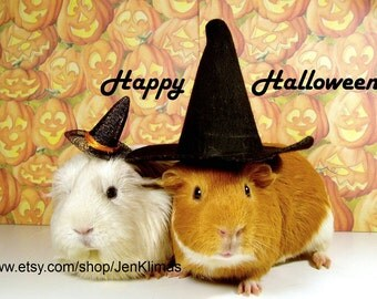 """GUINEA PIG WITCHES Collectible Happy Halloween Photograph - 8x10"""" Limited Edition Portrait"""