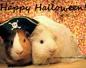 """GUINEA PIG Pirate and Bride Original HALLOWEEN Portrait 8 x 10"""" Limited Edition Glossy Photograph"""
