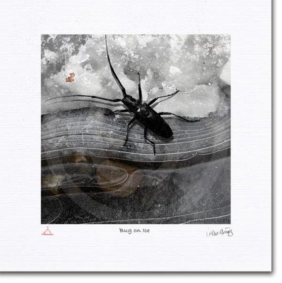 Bug on Ice