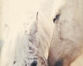 Horse Photography, Equestrian, Equine Art, White, Love, Kiss, Farm Life, Horse Art, Fine Art Print, Nature Art, Whisper, Square 8x8 Print