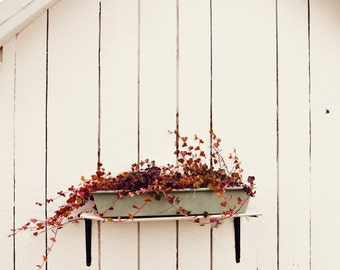 Fine Art Print, Rustic Art, Red Ivy, Teal Flower Box, White Barn, Minimalism Art, Wabi Sabi, Home Decor, Ivy Photo, Garden Art, Small Art