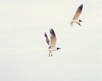 Fine Art Print, Seagull Photo, Fly, Ocean Art, Beach Art, Birds, Minimalism, Virginia Beach, Nature Art, Small Art, Nature Decor, Bird Print