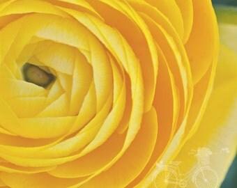 Fine Art Photograph, Flower Art, Bright Yellow, Ranunculus Flower, Garden Chic Photo, Floral Decor, Macro Art, Home Decor, Square Print
