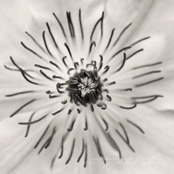 Fine Art Photograph, Clematis Flower, Macro Art, Flower Photo, Black and White Print, Botanical, Garden, Home Decor, Square 8x8 Print