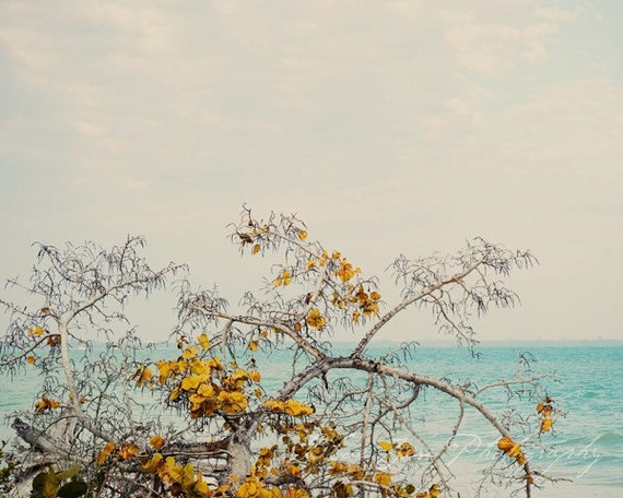 Abstract Fine Art Photograph, Tree with Yellow Leaves on the Shore, Golden, Teal, Ocean, Beach Art, Home Decor, Wall Art, 8x10Print