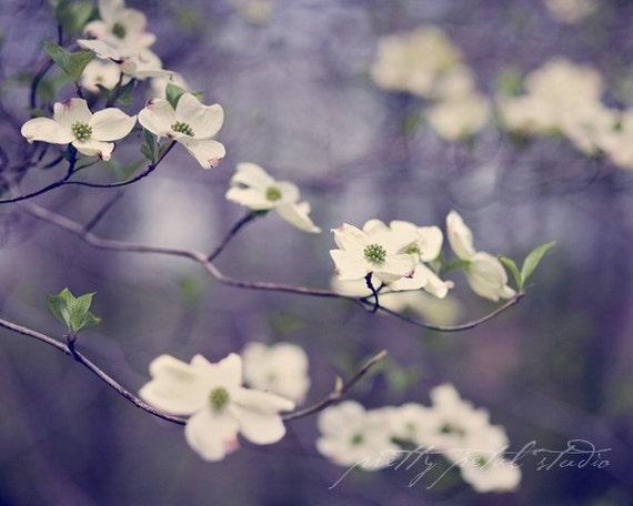 Fine Art Photograph, Dogwood Flowers, Flower Photo, Purple, Green, White, Botanical Art, Garden, Dreamy Art, Nature Art, Wall Art, 5x7 Print