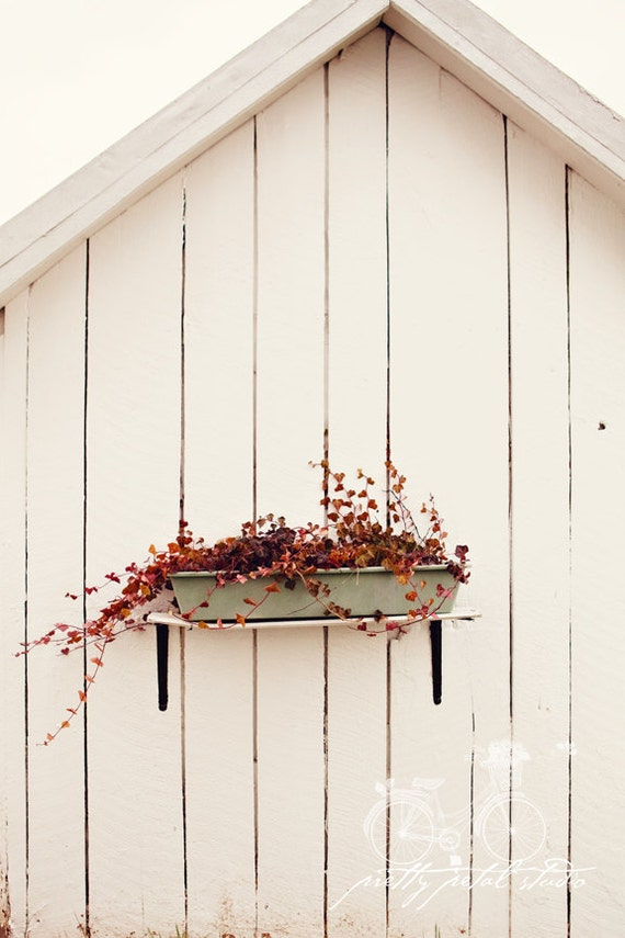 Fine Art Photograph, Red Ivy, Teal Flower Box, White Barn, Rustic Art, Minimalism, Wabi Sabi, Home Decor, Ivy Photo, Garden Art, 8x12 Print