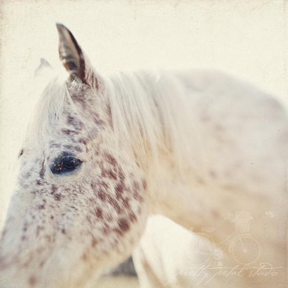 Fine Art Photograph, White Horse, Horse Photo, Freckles, Equestrian, Equine Print, Horse Lovers, Farm Life, Home Decor, Square 8x8 Photo
