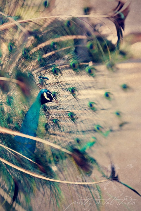 Fine Art Photograph, Peacock Photo, Abstract Print, Feathers, Dreamy Art, Sapphire Blue, Sage Green, Bird Lover, Home Decor, 8x12 Print
