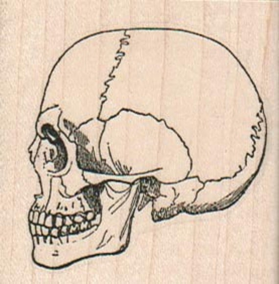 skulls rubber stamps stamping rubberstamp halloween Day of the Dead rubber stamps    wood mounted 14687
