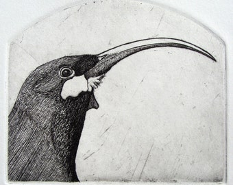 Extinct Bird Etching original hand drawn