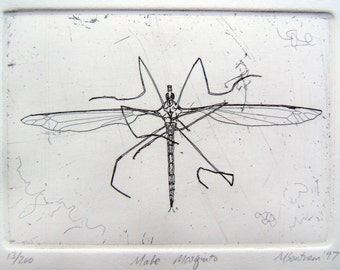 Male Mosquito original etching