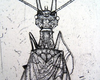 Dobsonfly hand drawn etching