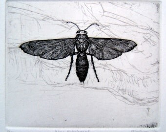 Wasp hand printed etching
