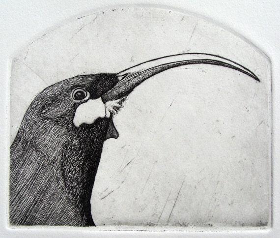 Extinct Bird Etching original hand drawn