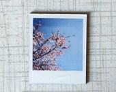 Polaroid Magnet, Blossom