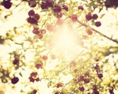 "Autumn Decor, Fall Photography, Tree Art, Nature, Apple Orchard Landscape, Sun, Yellow, Red, 8x8, ""Under The Apple Tree"""