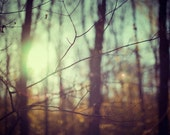 Woodland Photograph, Autumn, Forest, Trees, Spooky, Haunting, Rust and Mint Green, Landscape Photography - The things we left behind