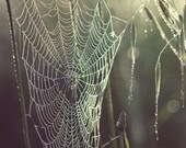 """Spider Web, Nature Photography, Green, Spring Garden, Morning Dew, 8x8, """"Pearly Dew Drops"""""""
