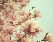 "Magnolia Tree, Flower Photography, Spring Decor, Pink Nursery Decor, Girls Room Decor, Bedroom Decor, Home Decor, ""Hellow Spring"""
