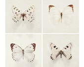 """SALE Four Butterfly Prints, Nature Photography, """"Wings"""" Minimal Simple Nature Art Prints, Beige Brown, Spring, White Wall Art"""