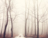 "Landscape Photography, Winter Trees, Enchanted Forest in Fog, Large Tree Art, Nature Wall Art, Winter Woodland ""The Bush of Ghosts"""