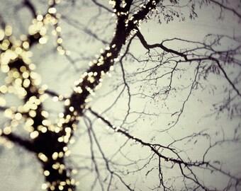 Winter Tree, Bare Branches, Fairy Lights, Christmas Decor, Tree Art, Festive Home Decor Silver Gray - On a cold winter night