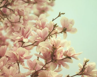"Magnolia Tree, Flower Photography, Spring Decor, Pink Nursery Decor, Girls Room Decor, Bedroom Decor, Home Decor, ""Hello Spring"""