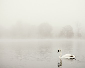"White Swan Photo, Minimalist Nature Photography, Minimalist Wall Art, Monochromatic White Wall Decor ""Swan's Way"""