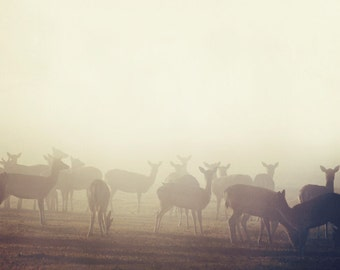 "Brown Deer Print, Nature Photography, Deer Art, Deer Silhouettes, Rustic Nature Art Print, Spring Fog, ""In Between Dreams"""