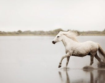 "White Horse Photography, Camargue Horse Running, White Wall Art, Equestrian Print, Modern Nature Photography, Animal ""Born to Run"""