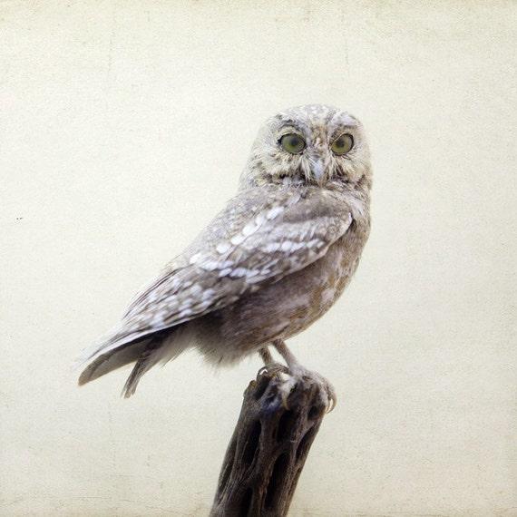 White Owl Print, Minimalist Bird Photography, Modern Rustic, White Wall Decor, Dorm Decor, Nature Art Print, 8x8 - Intelligent Design