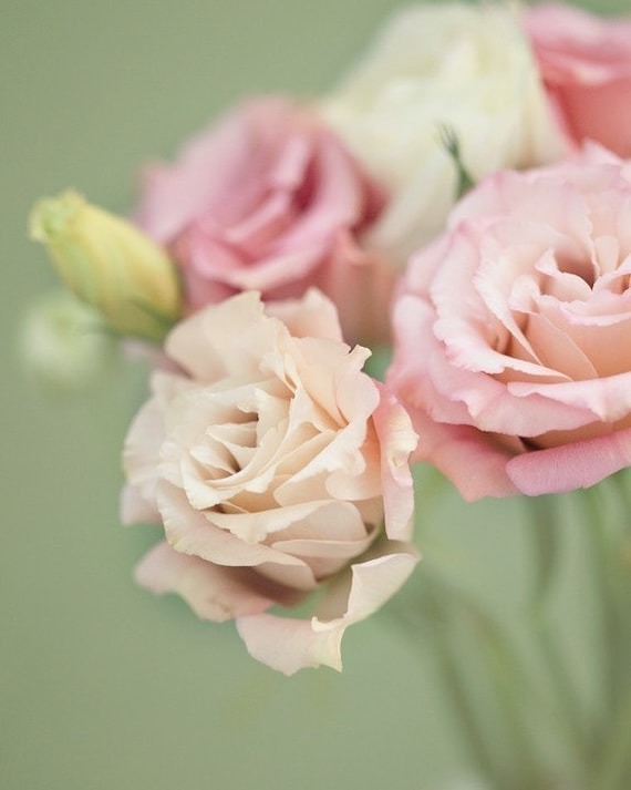 shabby chic decor flower photography spring art pastel, Beautiful flower