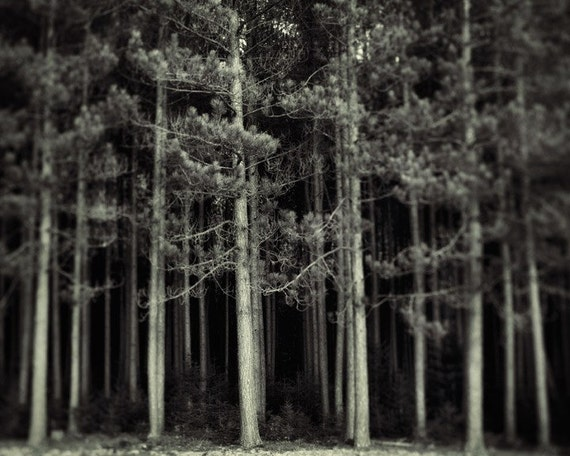 Black and White Photography, Forest Landscape, Home Decor, Woodland, Autumn, Halloween Decor, Fall - If you go into the woods today
