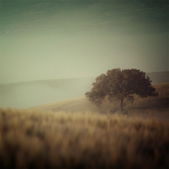 Fine Art Landscape Photography, Tuscan Wall Art, Tree Fog, Tuscany Italy Photography, Rustic Decor, 8x8 Art Print  - Spying on a Tree