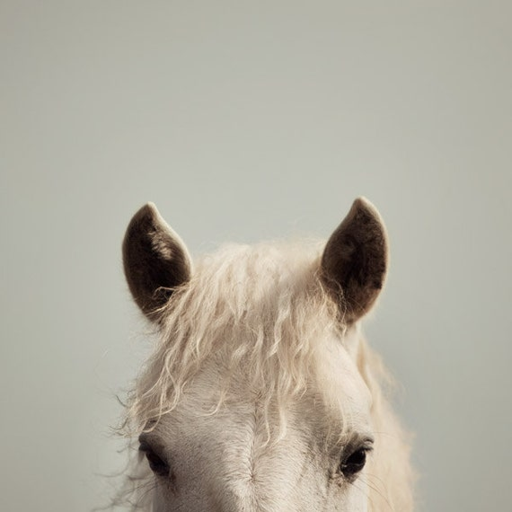 Nursery Wall Art, Horse Photograpy, Animal Photography, Cute Animal Art, Nature Print, Gray Wall Art 8x8 - Peek-a-boo