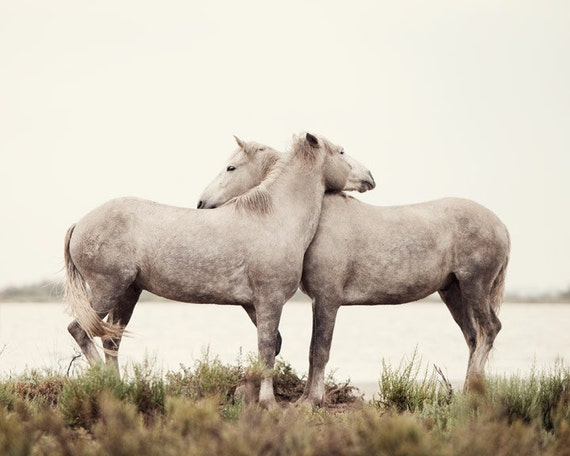 Embrace - Horse Photography, White Horses, Nature, Neutral Wall Decor, Spring, Rustic, Cream, Nursery Art, Baby's Room