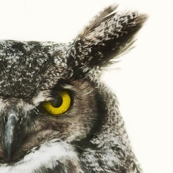 "Owl Decor, Minimalist Nature Photography, Bird Photography, Horned Owl Print, Nature Print, Neutral Art, 8x8 ""Say It Like You Mean It"""