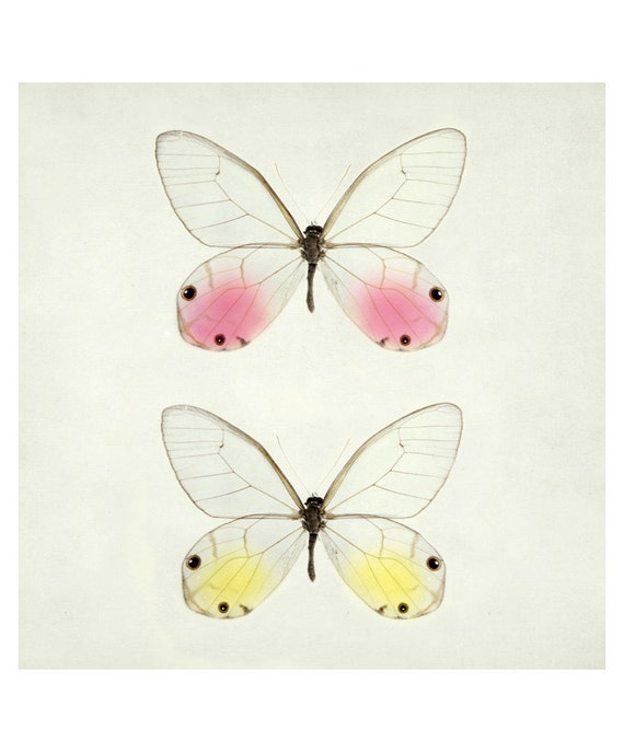 Glasswings - Butterfly Print, Spring, Nature Photography, Pastel Art, Garden Art, Nursery Wall Art, Mother's Day, Modern, 8x8